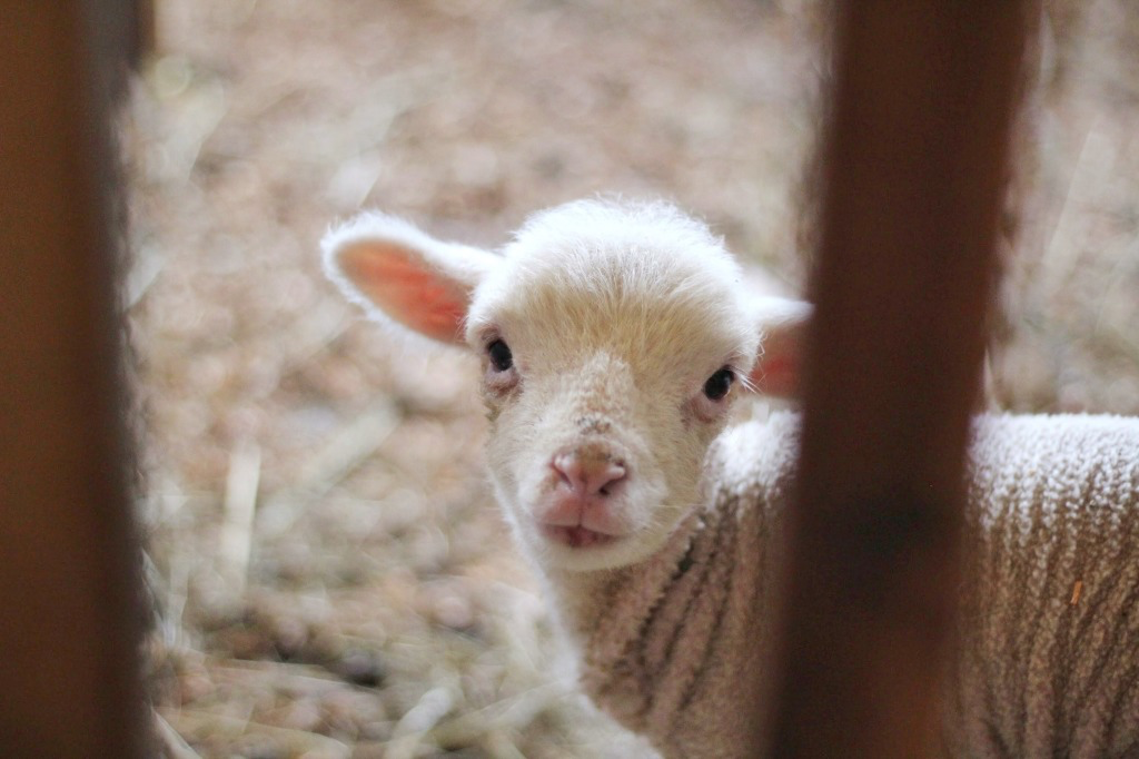 Feed My Sheep: 3 Exhortations for our Pastors